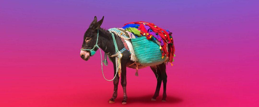 Breaking the money mule's back